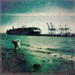 Hund an der Elbe